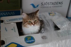 Samtidigt har Tilla egentid i en kartong ...