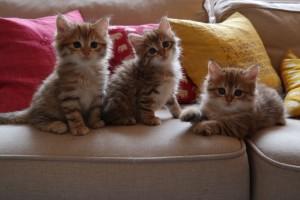 Scilla, Flora och Daisy 6 veckor