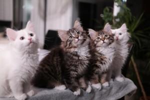 Cindy, Milla, Tatjana, Yasmin 12 veckor