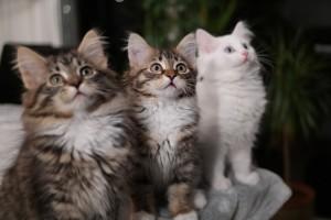 Milla, Tatjana, Yasmin 12 veckor