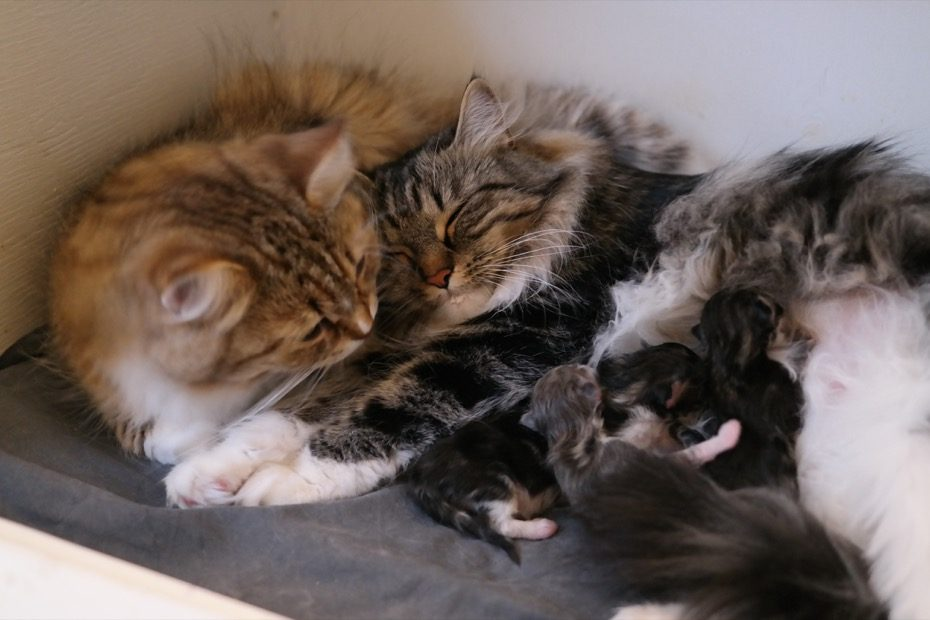Mamma Chai, mormor Tilla och ungarna